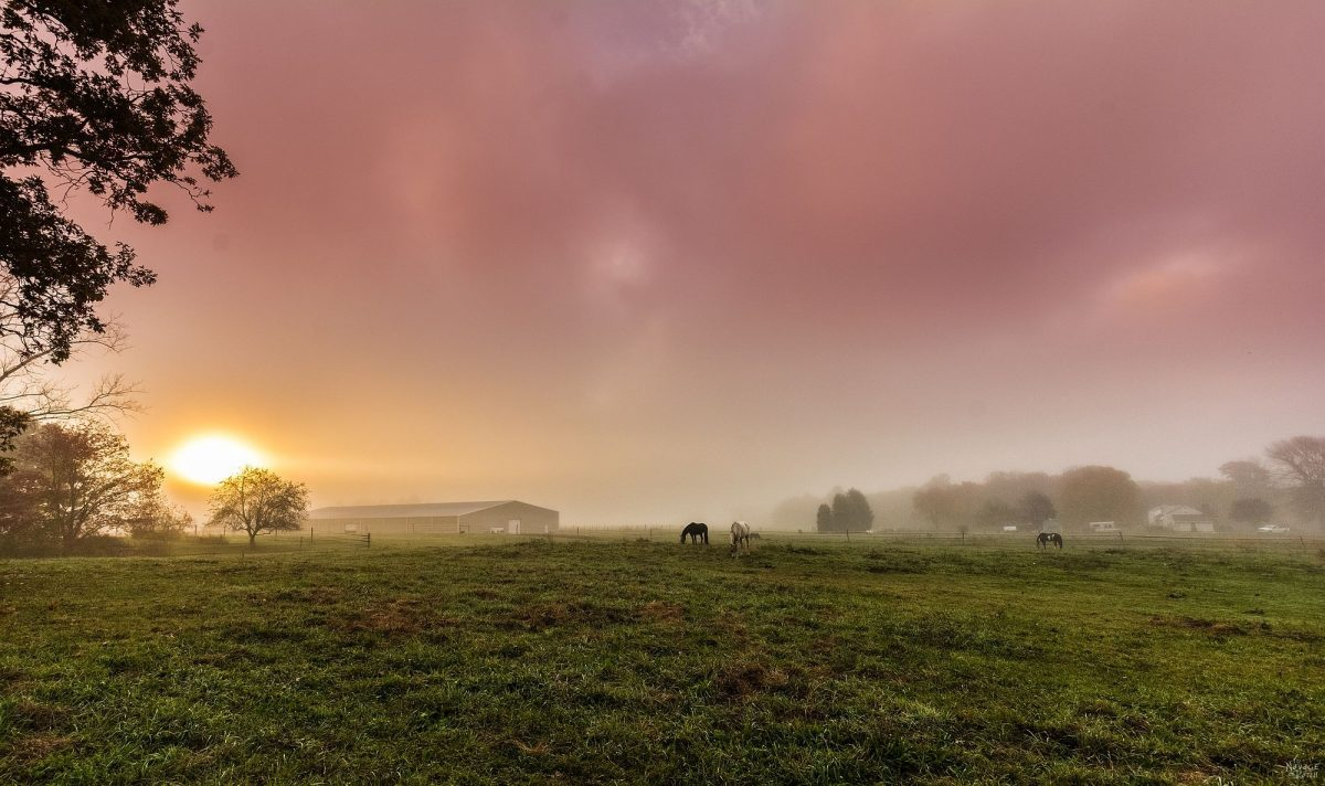 Trusting my Gut | Intuition | Horse Farm | Horses | Sunrise | Foggy Morning | Horses | Trust your feelings | TheNavagePatch.com