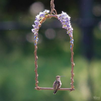 DIY Hummingbird Perch | How to make a hummingbird swing from copper pipe | How to attract hummingbirds | Upcycled copper pipe | Repurposed pipe | Easy garden diy | #TheNavagePatch #DIY #gardens #upcycled #repurposed #hummingbird #garden #easydiy | TheNavagePatch.com