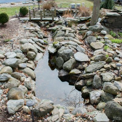 The Pond Project – Part 1