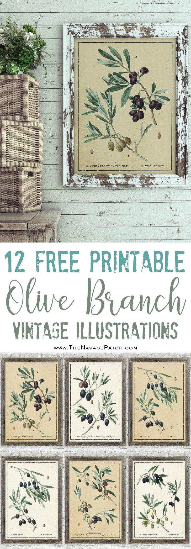 Vintage botanical olive branch illustrations pinterest image
