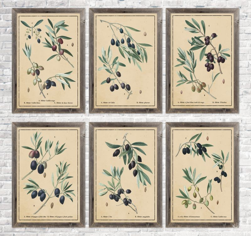 6 vintage botanical olive branch illustrations in aged paper background