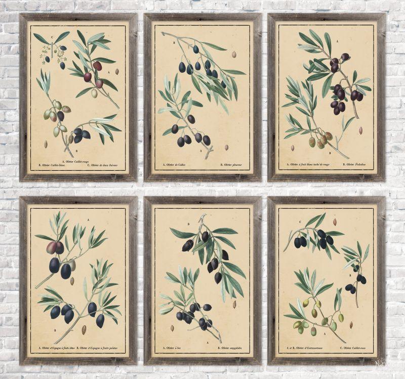 6 vintage botanical olive branch illustrations in aged paper background