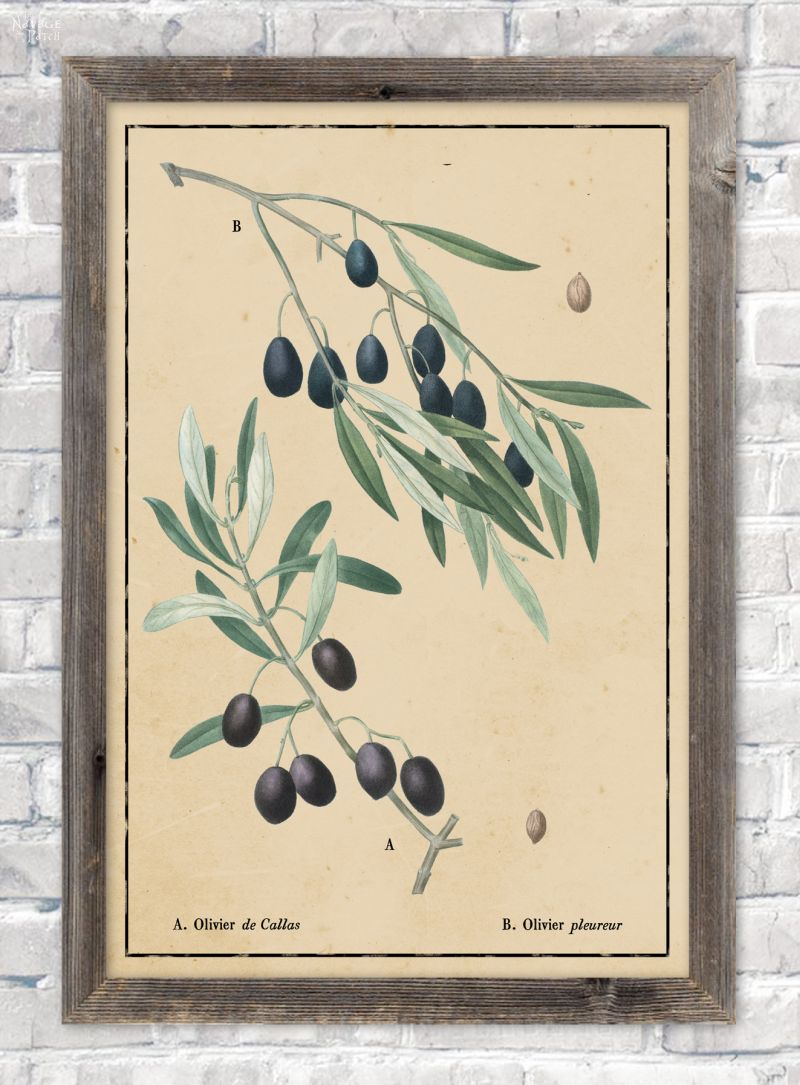 Vintage botanical olive branch illustration in aged paper background