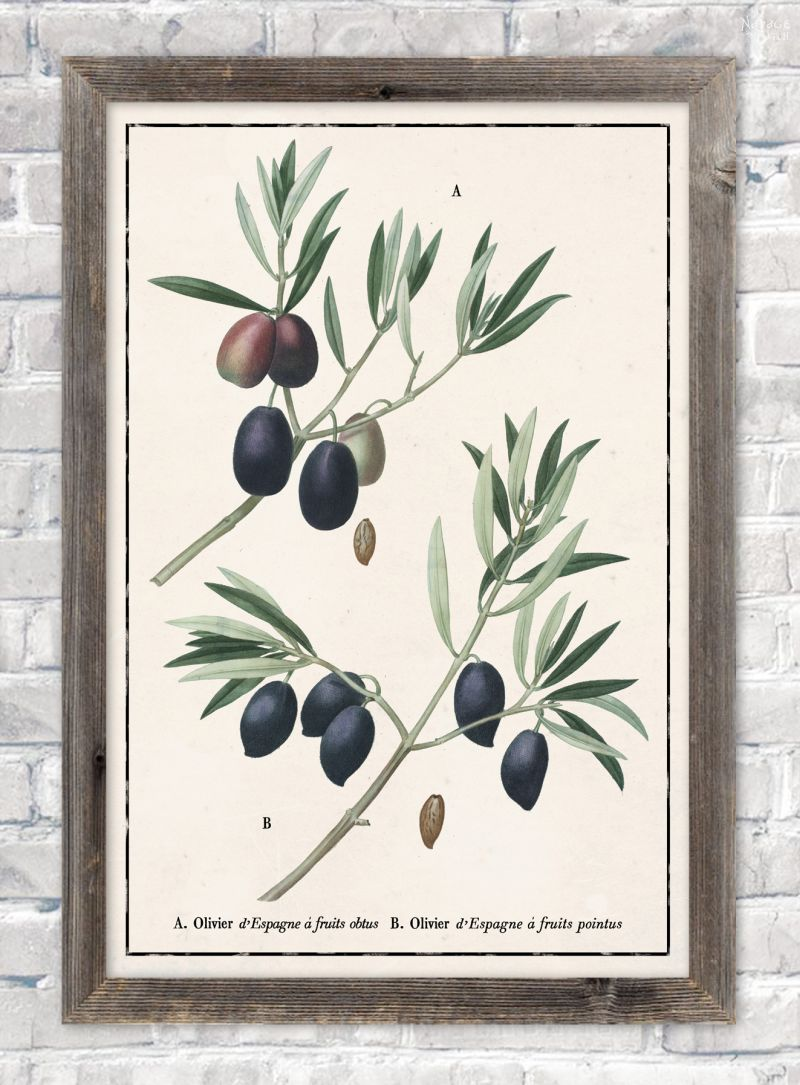 Vintage botanical olive branch illustration in ivory color paper background