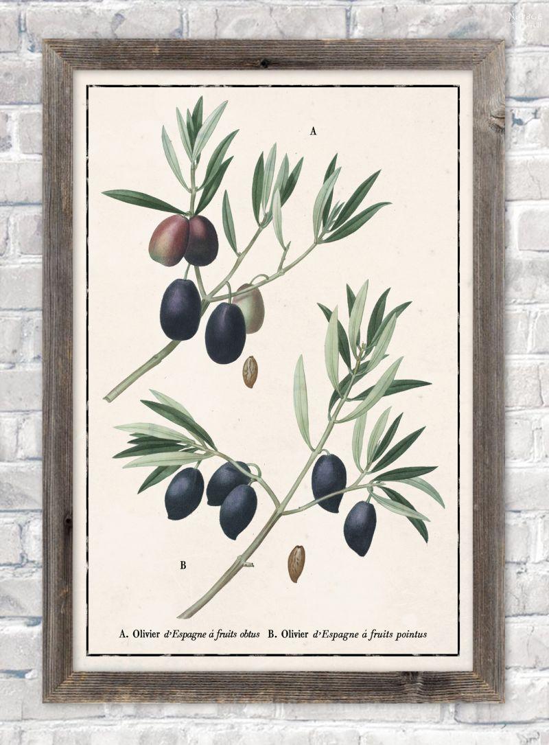 Vintage botanical olive branch illustration in ivory color paper background