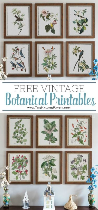 How to Easily Create a Gallery Wall and Free Botanical Printables | Creating a Gallery Wall The Easy Way | 18 free printable high-resolution vintage bird illustrations | 12 free printable vintage botanical illustrations | 12 free printable vintage orchid illustrations | Free printable wall art | How to get engineering prints | Ready to print DIY wall decoration | Free printable botanical prints | Hassle free Gallery Wall | #FreePrintable #GalleryWall #HowTo #Tutorial | www.TheNavagePatch.com