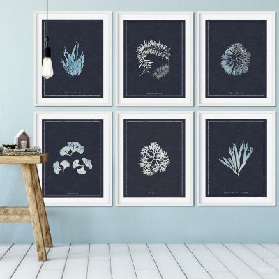 Guest Bathroom Wall Art | Free printable coastal wall art for bathroom | Free printable nautical wall art for bathroom | How to create a gallery wall the easy way | DIY bathroom wall art|with upcycled frames | Free printable French wall art for guest bathroom | Leo Fontan - A. P. Martial - Anna Atkins - Ernst Haeckel | #TheNavagePatch #FreePrintable #DIY #GalleryWall #Coastal #Nautical | TheNavagePatch.com