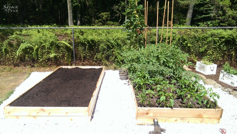 how to build a raised garden bed - two beds next to each other, one planted one not