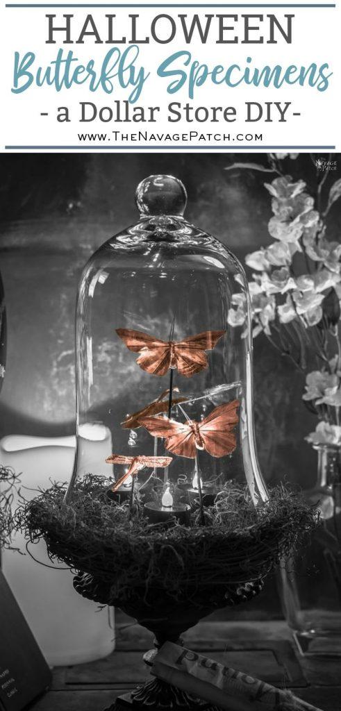 Halloween Butterfly Specimens   Grandin Road Inspired DIY Halloween decor   Beautiful butterfly decoration for girls room   DIY Dollar Store Halloween decoration   Upcycled and Repurposed Halloween decor   #TheNavagePatch #Upcycled #halloweendecorations #halloween #easydiy #DIY #DollarTree #DollarStore #halloweencrafts #HarryPotter #halloweenparty #butterfly #GrandinRoad #knockoff   TheNavagePatch.com