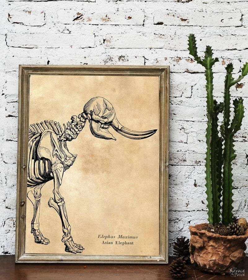 Free Animal Skeleton Printables (Set of 9) | Vintage style free Halloween printables | How to create a chic Halloween gallery wall for free | Free printables for Halloween | DIY Halloween Anatomy decoration | #TheNavagePatch #freeprintable #halloweendecorations #halloween #freeart #halloweencrafts #walldecor #DIY #gallerywall #halloweenparty | TheNavagePatch.com