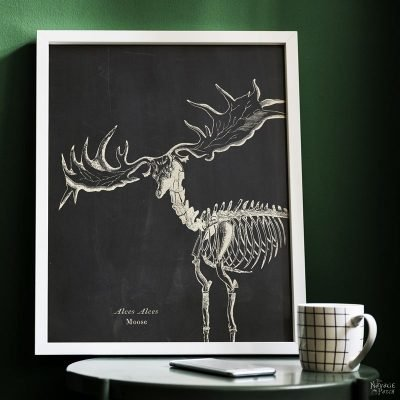 10+ Free Animal Skeleton Printables (Vintage Style)