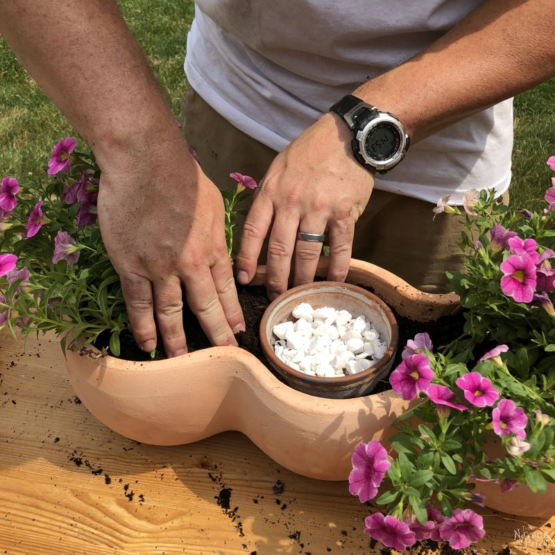 planting pink flowers in a clay pot