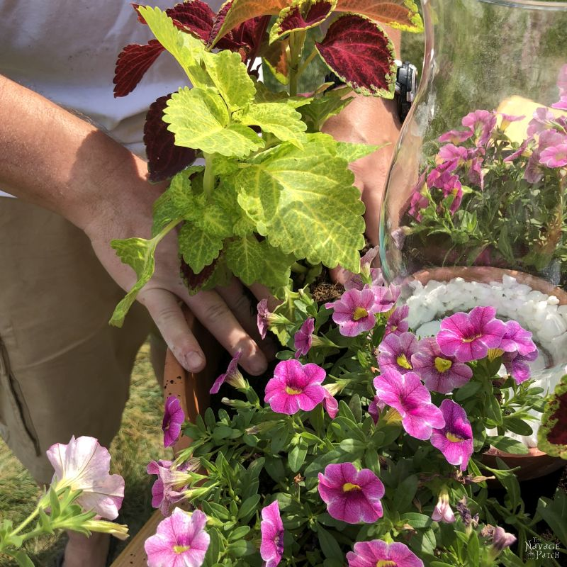 filling a large flower pot with annual flowers