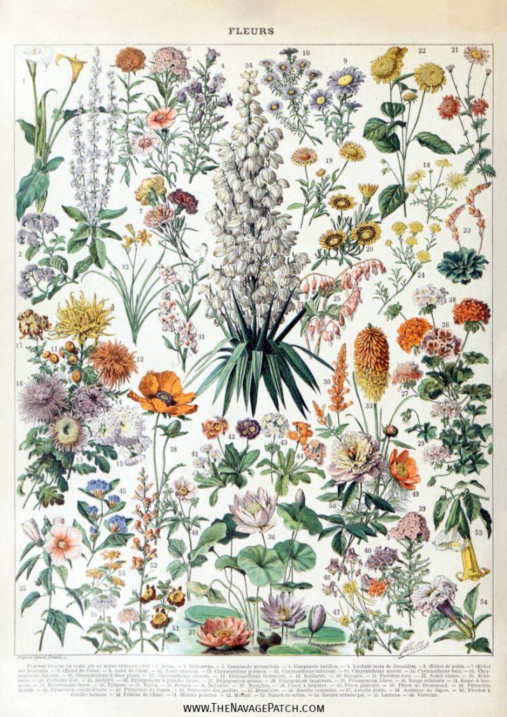 Treadle Yard Goods: Floral Prints