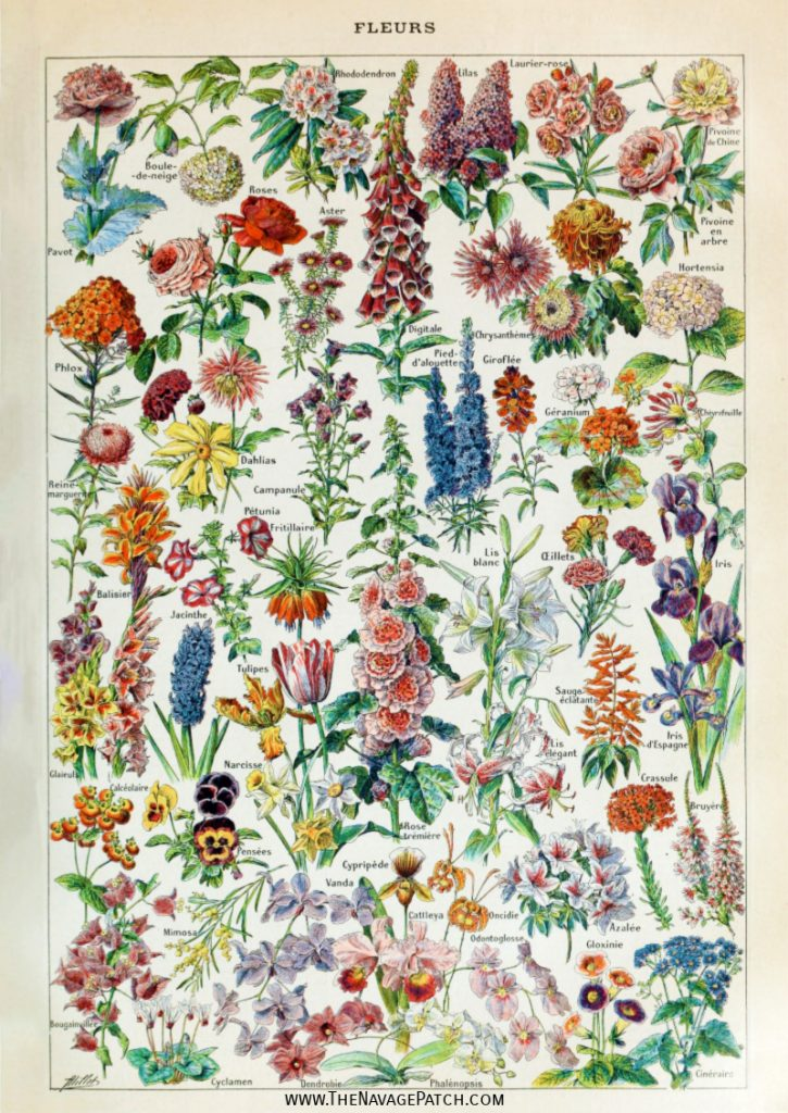 Amazing Free Vintage Botanical Prints The Navage Patch