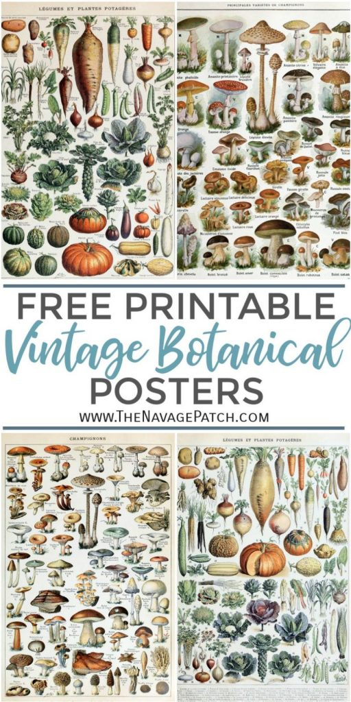photo regarding Free Printable Vintage Posters named Remarkable Cost-free Common Botanical Prints - The Navage Patch