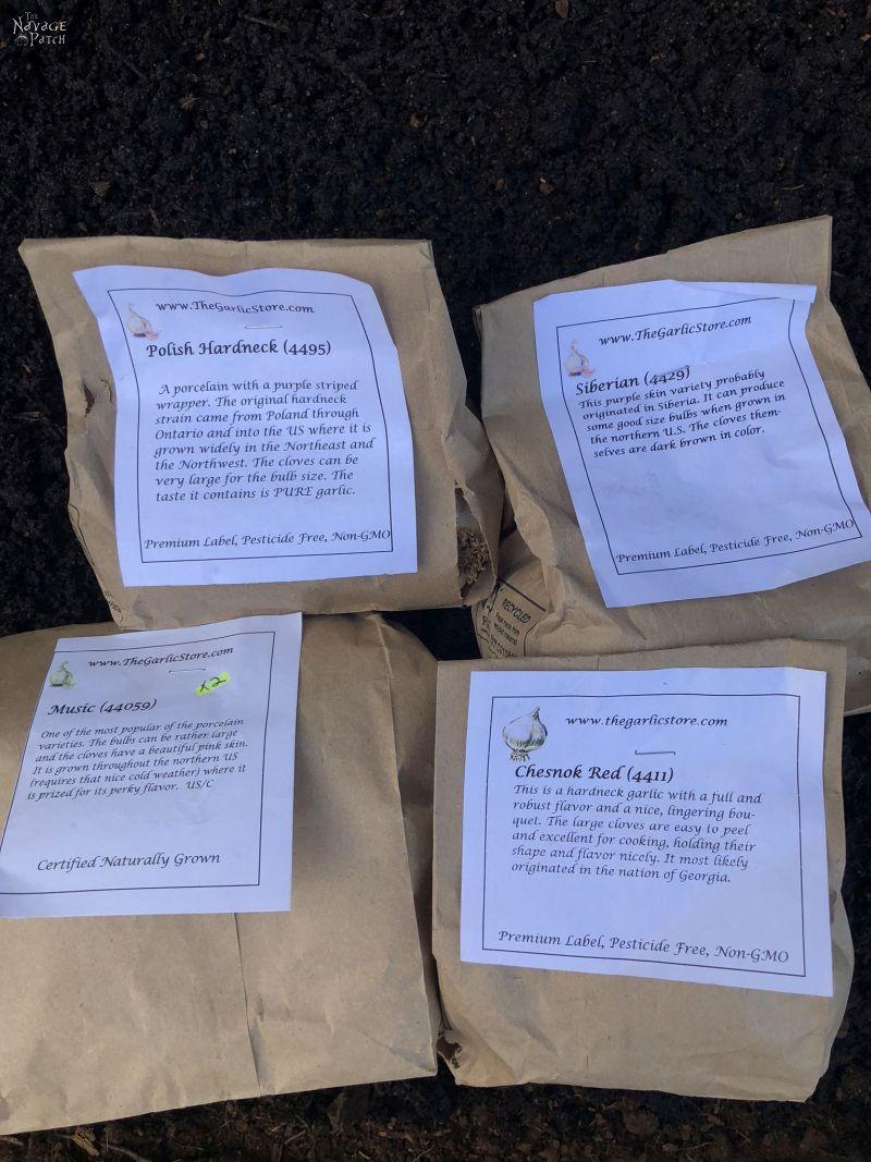 4 bags of seed garlic