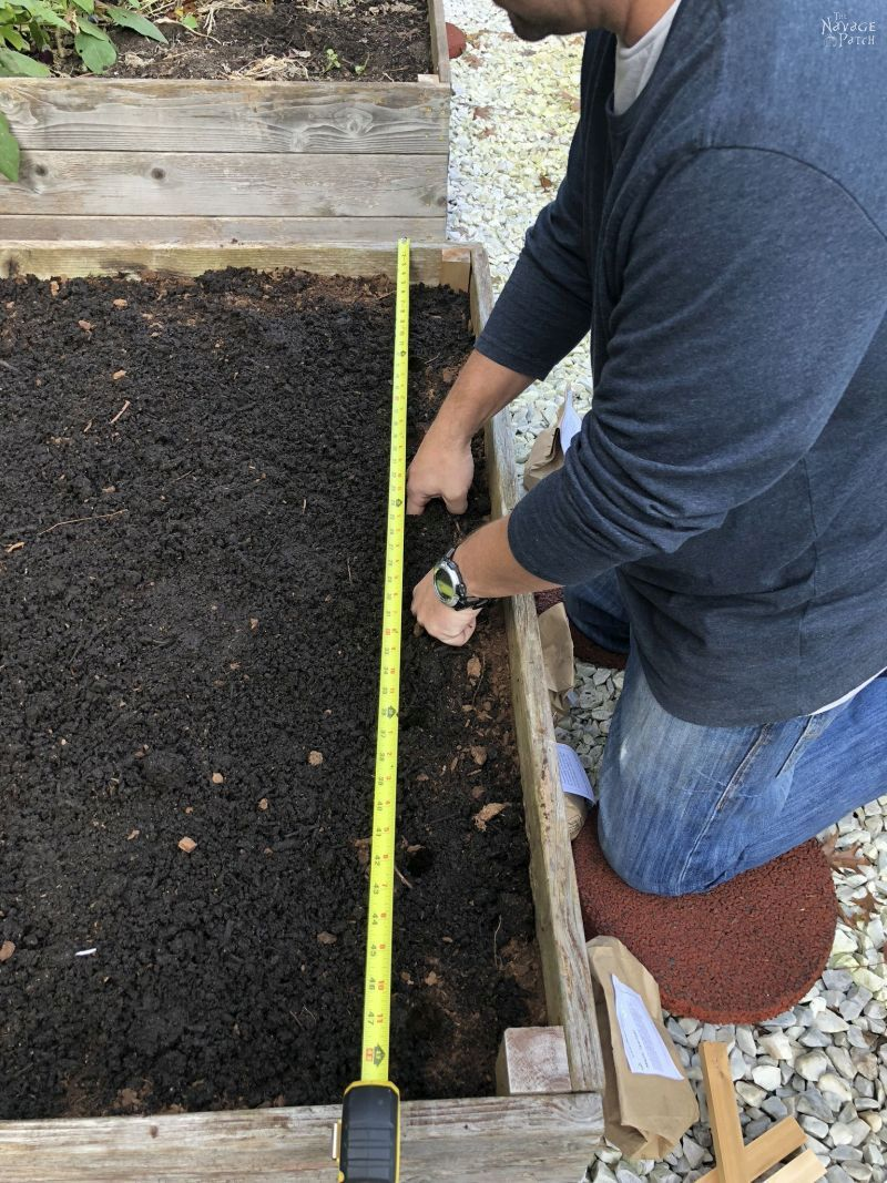 preparing soil for garlic planting