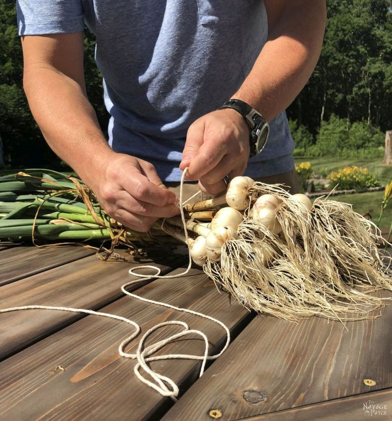tying a bunch of garlic
