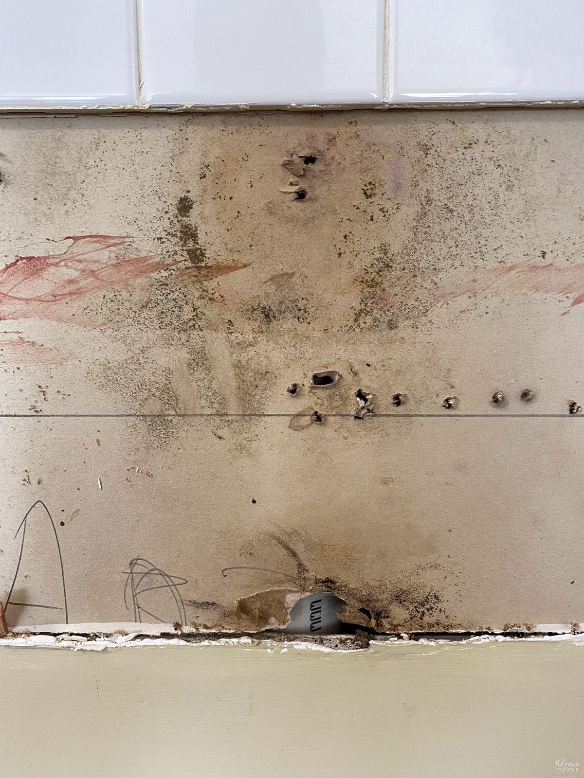 black mold on drywall