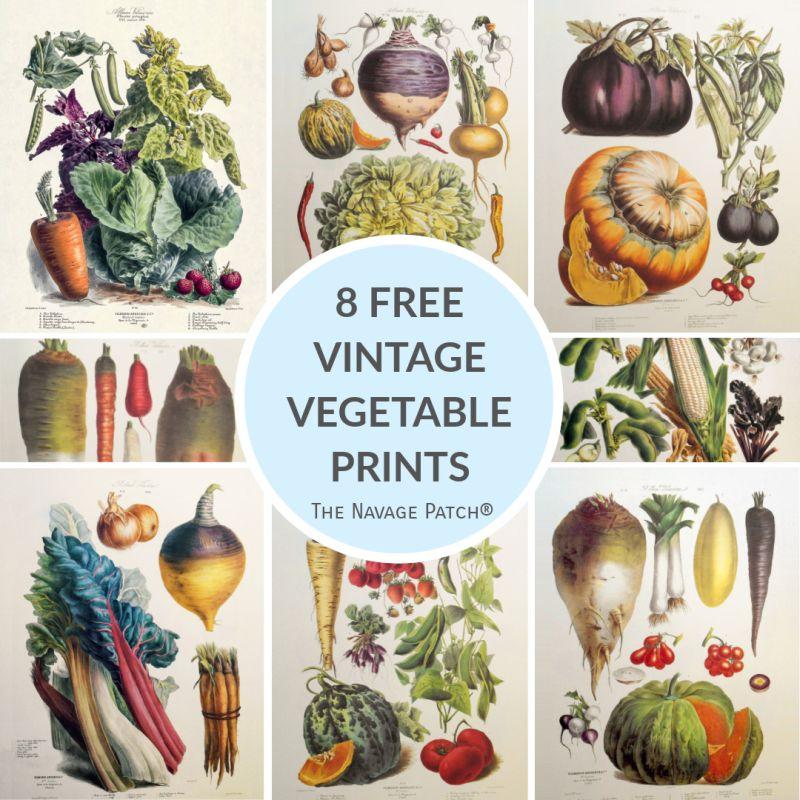 Free Vintage Vegetable Prints - TheNavagePatch.com