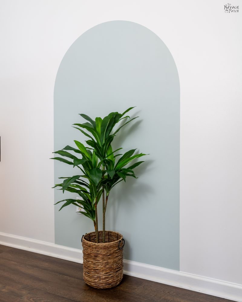 plant centered within an arch accent wall